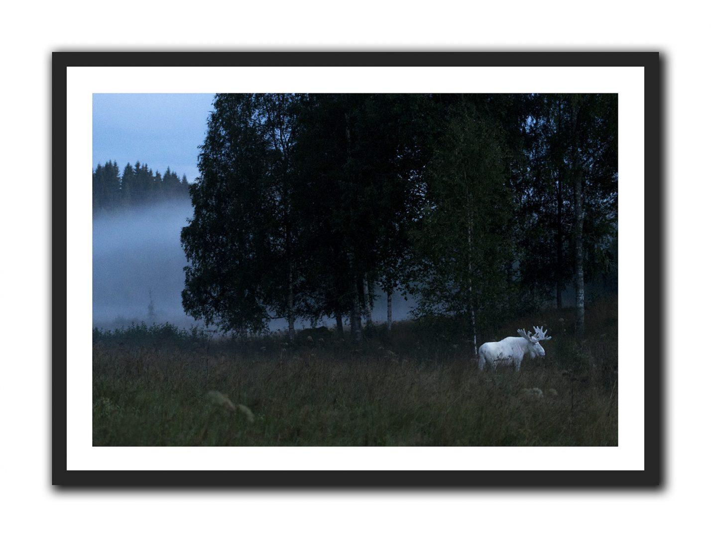 Ferdinand, Spirit Moose